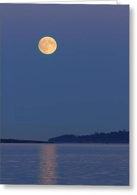 Moonlight - 365-224 Greeting Card by Inge Riis McDonald