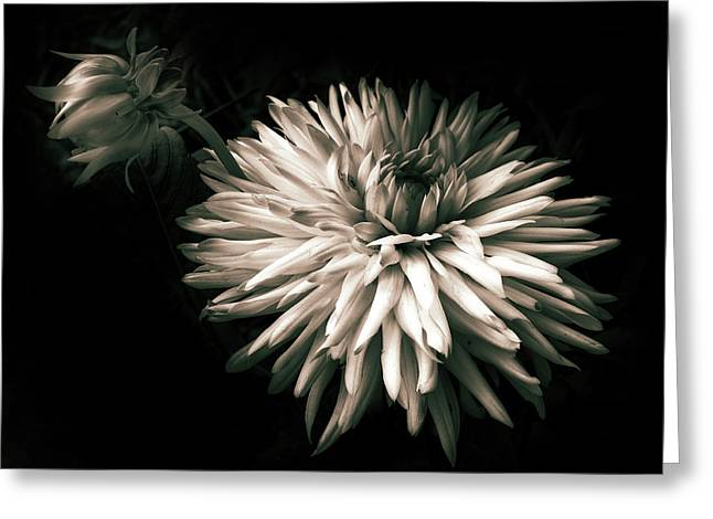 Moonlight And Dahlia Greeting Card