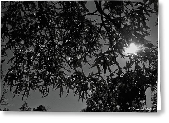 Greeting Card featuring the photograph Moonlight by Betty Northcutt