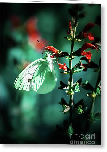 Moonlight Butterfly Greeting Card