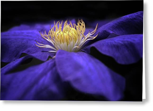 Moonlight Clematis Greeting Card