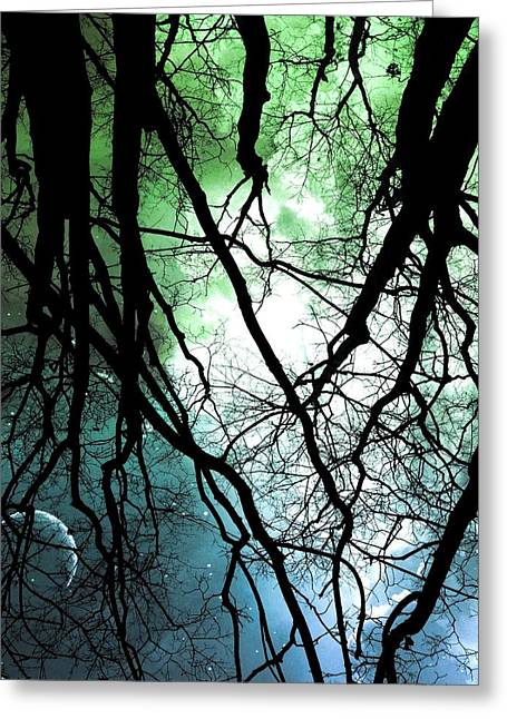 Moonlight Forest  Greeting Card by Marianna Mills