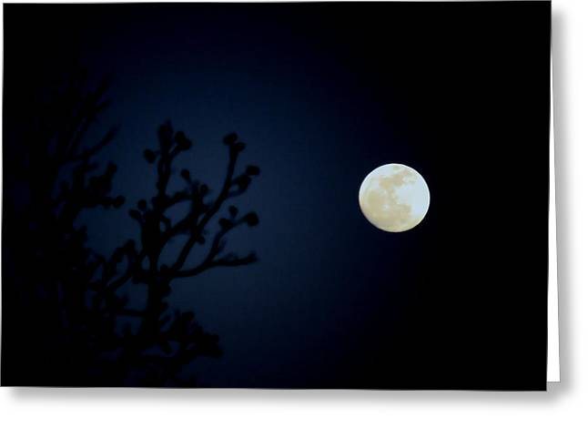Moonlight Madness Greeting Card by Karen Scovill