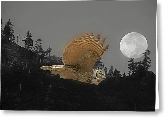 Moonlight Owl Greeting Card by Donna Kennedy