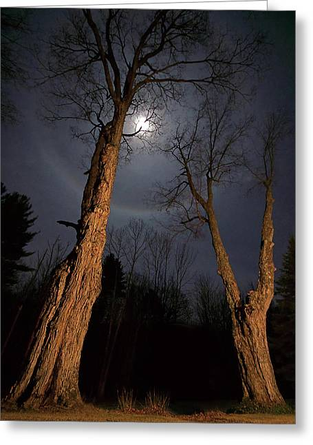Moonlight Sentinels Greeting Card by Jerry LoFaro