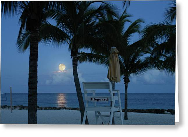 Moonlight Serenade Greeting Card by Angie Bechanan