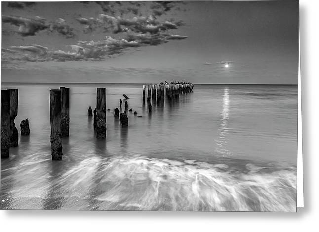 Greeting Card featuring the photograph Moonlight Serenade by Mike Lang