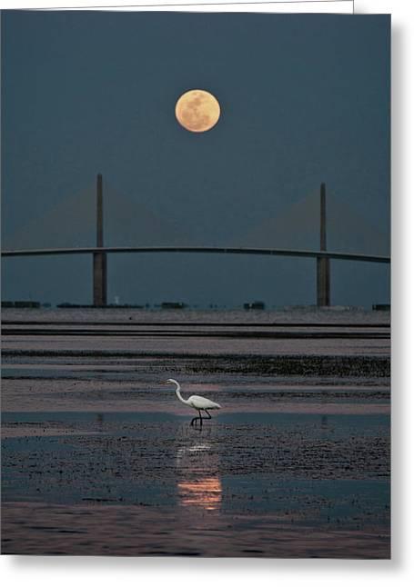 Moonlight Stroll Greeting Card