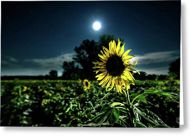 Greeting Card featuring the photograph Moonlighting Sunflower by Everet Regal