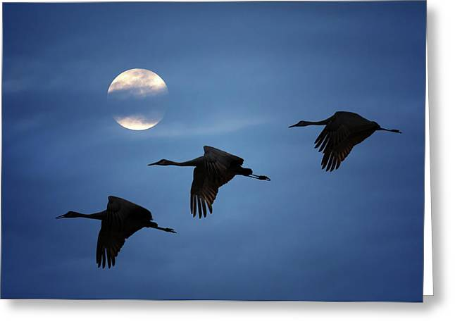 Greeting Card featuring the photograph Moonlit Flight by Susan Rissi Tregoning