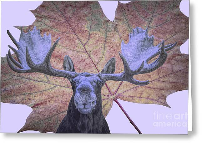 Greeting Card featuring the photograph Moonlit Moose by Ray Shiu