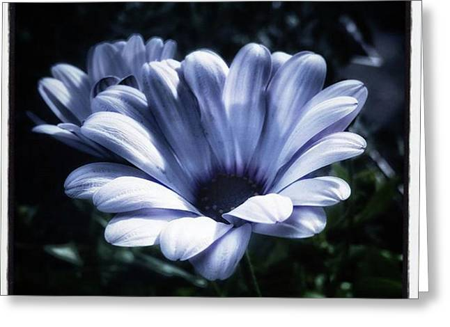 Greeting Card featuring the photograph Moonlit Petals. From The Beautiful by Mr Photojimsf