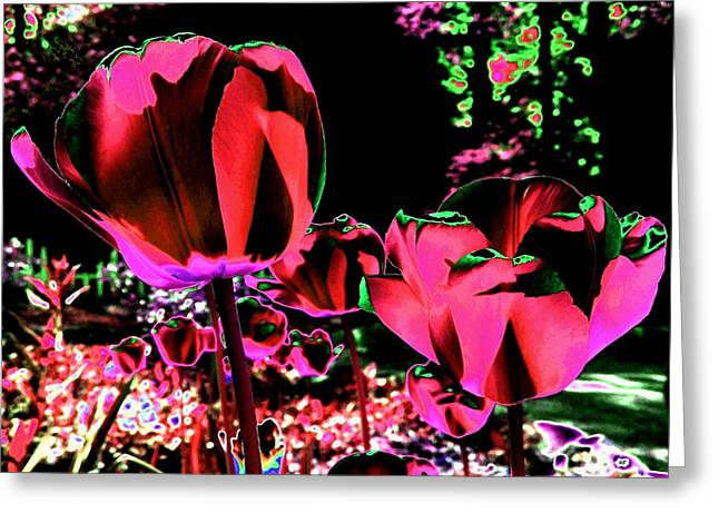 Moonlit Radiant Tulips Greeting Card by Will Borden
