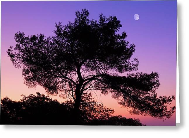 Moonlit Serenade Greeting Card