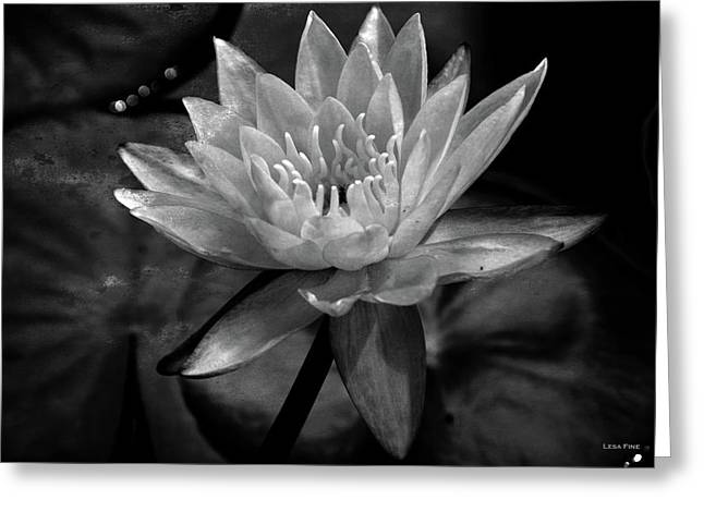 Moonlit Water Lily Bw Greeting Card