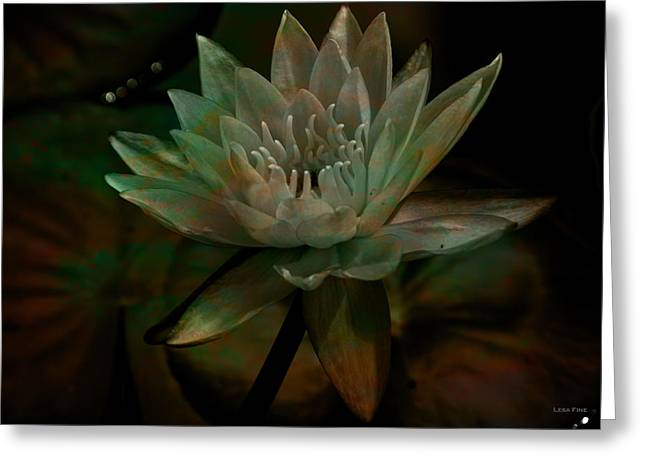 Moonlit Water Lily Greeting Card