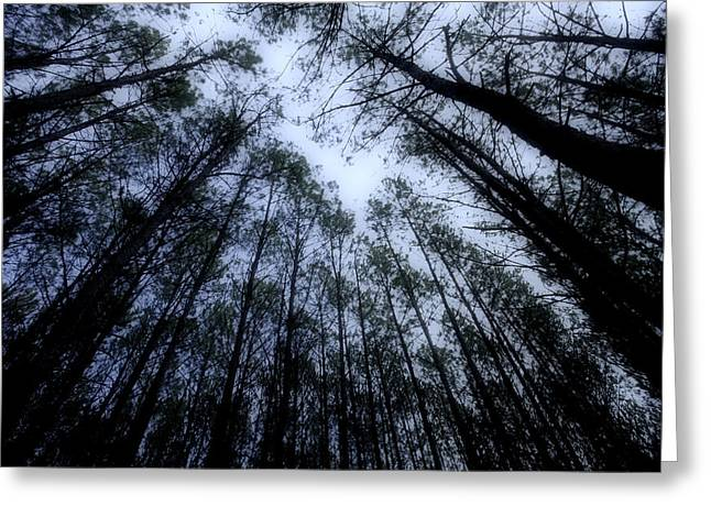 Moonlite Forest Greeting Card by M K  Miller