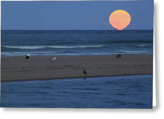 Moonrise At Cape Cod National Seashore Greeting Card by John Burk