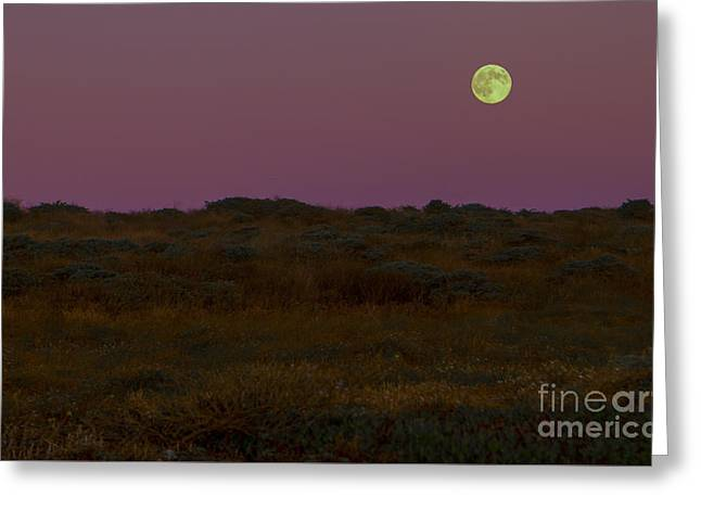 Moonrise In Bodega Bay Greeting Card by Diane Diederich
