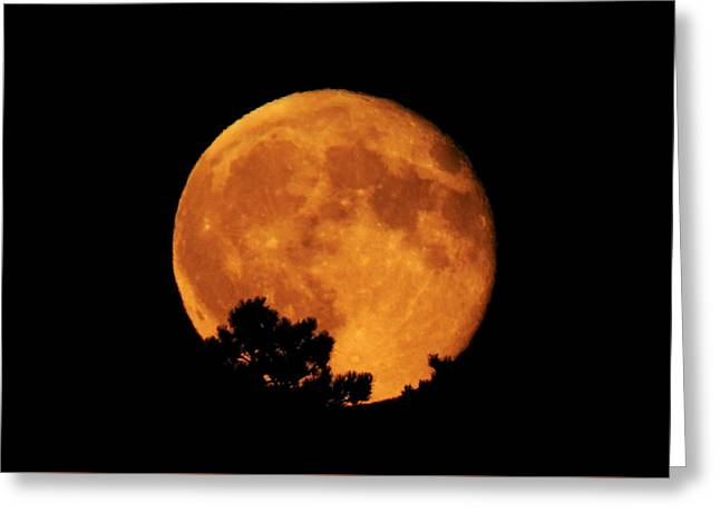 Moonrise Over Pines Greeting Card