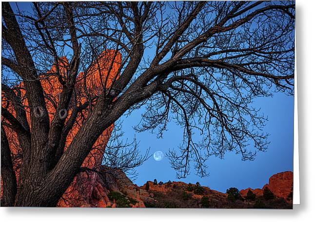 Moonset In The Garden Greeting Card by Darren White