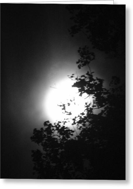 Moonshine Through The Leaves Greeting Card