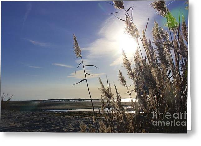 Moore's Beach Edge Greeting Card by Kristie Marz
