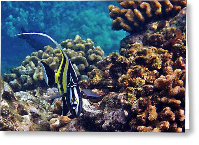 Reef Fish Greeting Cards - Moorish Idol Greeting Card by Bette Phelan