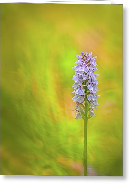 Moorland Spotted Orchid - Beautiful Wild Flower Greeting Card by Dirk Ercken