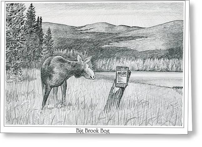 Moose At Big Brook Bog Greeting Card
