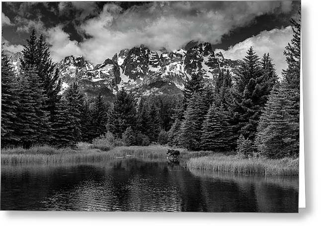 Moose At Schwabacher's Landing Greeting Card
