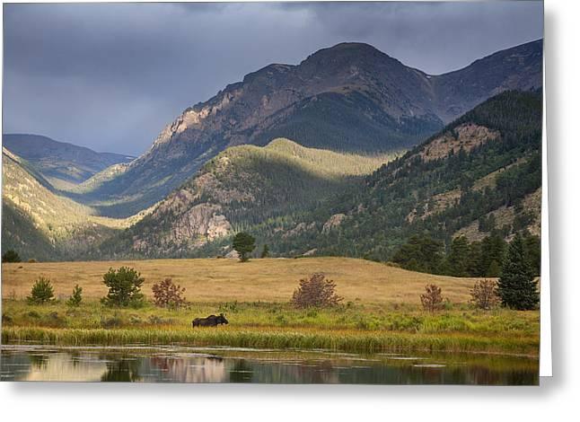 Moose At Sheep's Lakes Greeting Card