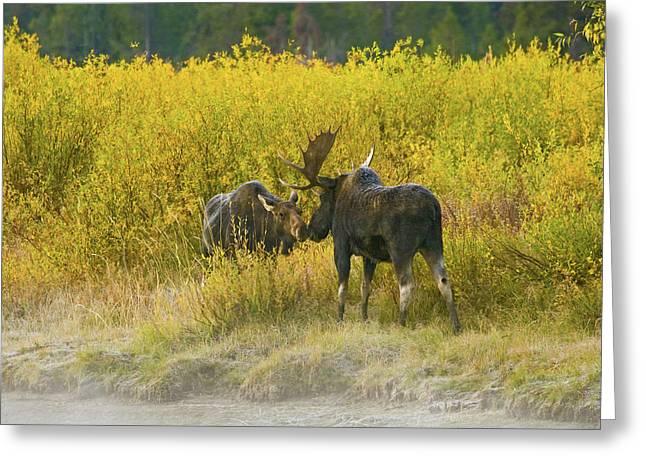 Moose Couple Greeting Card