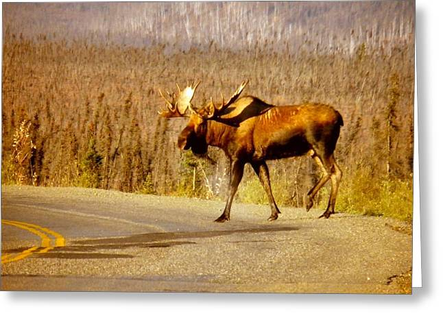 Moose Crossing Greeting Card by Adam Owen