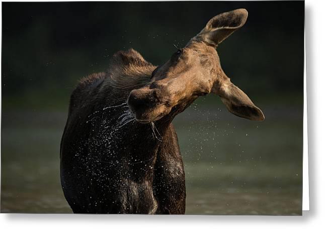 Moose Drool // Glacier National Park  Greeting Card