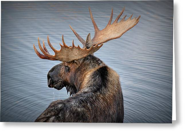 Moose Drool Greeting Cards - Moose Drool Greeting Card by Ryan Smith