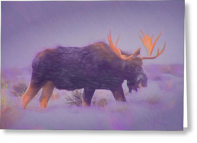 Moose In A Blizzard Greeting Card