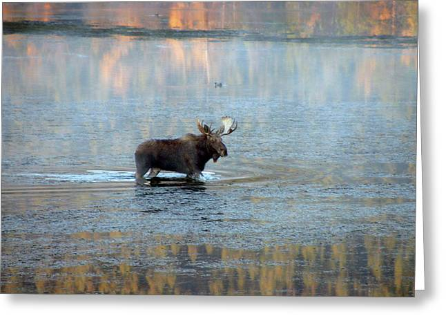 Moose In Autumn Snake Greeting Card by Michael Riley