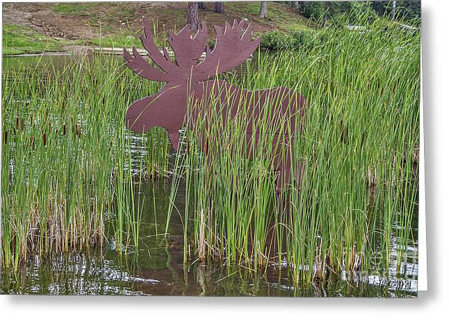 Greeting Card featuring the photograph Moose In Bulrushes by Sue Smith