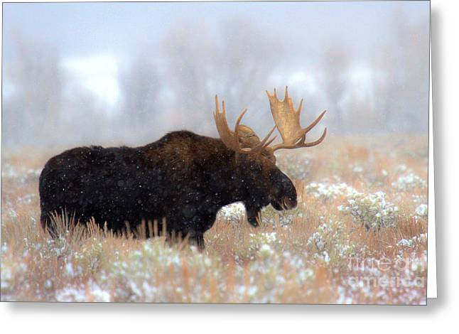 Moose In The Fog Silhouette Greeting Card by Adam Jewell