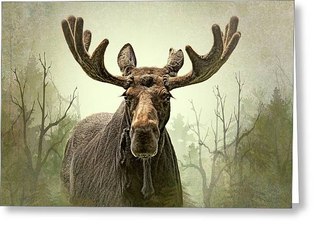 Greeting Card featuring the photograph Moose In The Woodland Forest by Jennie Marie Schell