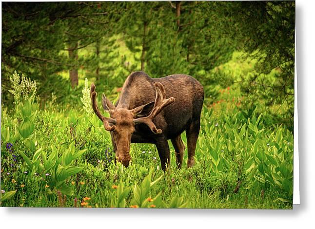 Moose In Wild Flowers Greeting Card