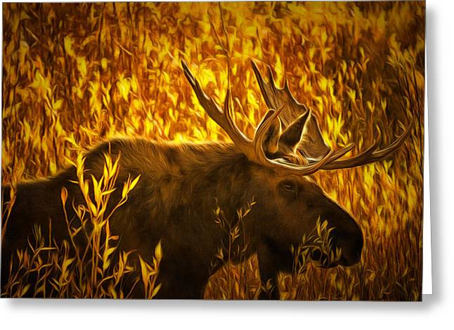 Moose In Willows Greeting Card by Mark Kiver