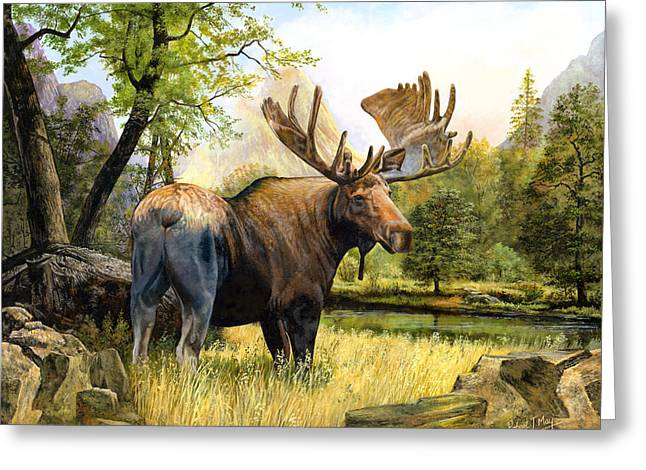 Moose Study Greeting Card