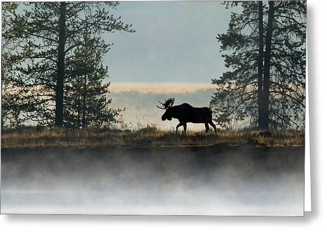 Moose Surprise Greeting Card