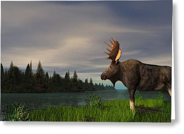 Moose Greeting Card by Walter Colvin