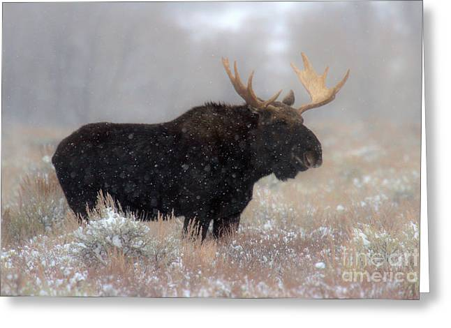 Moose Winter Silhouette Greeting Card by Adam Jewell