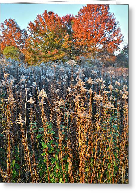 Greeting Card featuring the photograph Moraine Hills Fall Colors by Ray Mathis