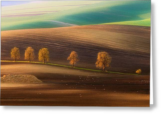 Moravian Trees Greeting Card by Piotr Krol (bax)