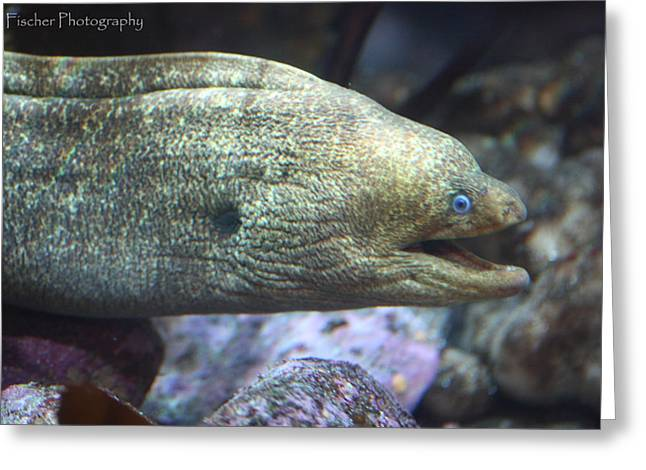 Moray Eel  Greeting Card by Kyle Fischer